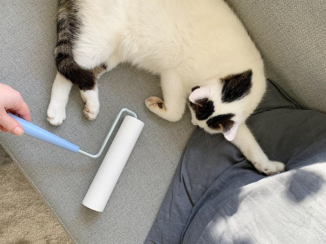 Mattoteippiharja Kissa